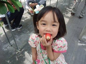 20120528ichigo02.jpg